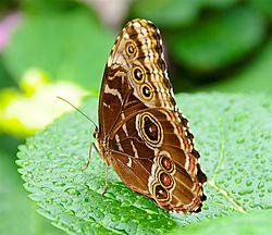 Butterflies_052.jpg