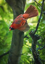Cardinal_Nikonians-4700-2.jpg