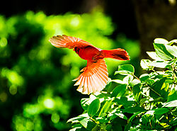 Cardinal_Nikonians_1mb-4474.jpg