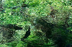 Clear_Water_Trout_I.jpg