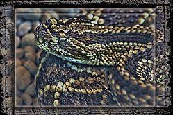 Costa_Rica_Snake1.jpg