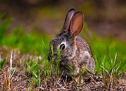 DSC7941_Botanical_Bunny.jpg