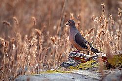 DSC7988_Bird_on_Lichen.jpg