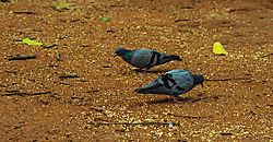 Doves_1_of_1_.jpg