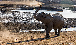 Dusty_Elephant.jpg