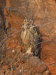 Eagle_Owl_1.jpg