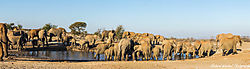 Elephant_Pano.jpg