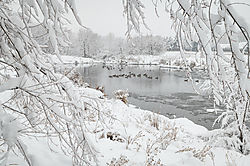 Framed_Geese_on_Pond_Flat_Hi-res.jpg