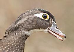 George_Reifel_Bird_Sanctuary-6346.jpg