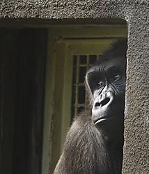 GorillaDoorway_sm.jpg