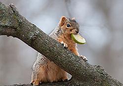 HungrySquirrel1.jpg