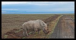 Lake_Nakuru_Rhino_16.jpg