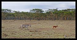 Lake_Nakuru_a_scenic_13.jpg