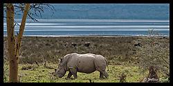 Lake_Nakuru_a_scenic_9.jpg