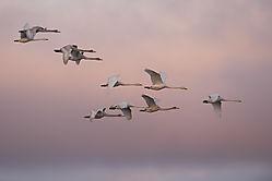 Morning_birds.jpg