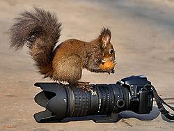 Nik_squirrell.jpg