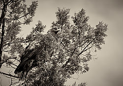Owl_9.jpg
