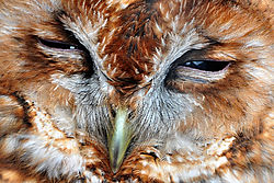 Owl_Knutsford.JPG