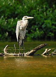 PAS1983_nikon_wildlife.jpg