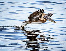 Pelican_Flare.jpg