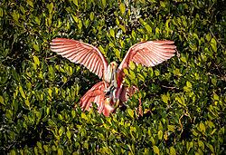 Pink_Wings.jpg