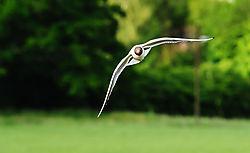 Seagull14.jpg