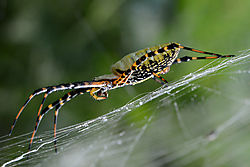 Spider_on_Web.jpg