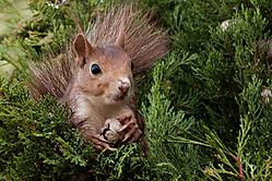 Squirl_in_tree_12_of_12_1.jpg