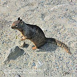 Squirrel_Stand.JPG
