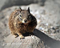 Squirrel_signature.jpg