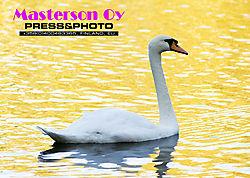 SwanLOW_2277.jpg