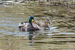 Tabor_Lake_and_Clear_Creek_Prospect_Park_Wheat_Ridge_CoApril_15_2014_JG1_2720.jpg