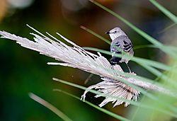 Warbler-jpg_.jpg