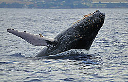 Whale-Breach-51.jpg
