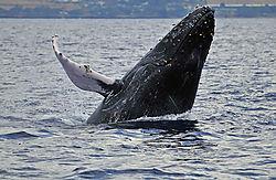 Whale-Breach-61.jpg