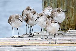 Winter_Birds.jpg