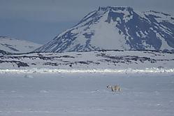 arctic_silence.jpg