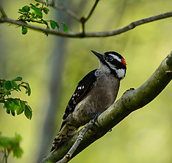 backyard_birds--3.jpg