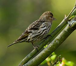 backyard_birds-.jpg
