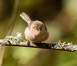backyard_birds-2773.jpg