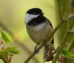 backyard_birds-4906.jpg