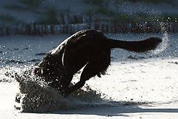 entschleunigter_Hund.JPG