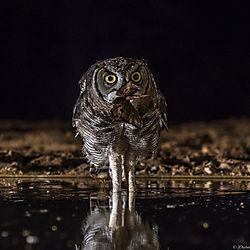 owl-with-moth.jpg