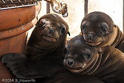 sea_lions1.jpg