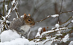 squirrel8.jpg