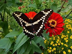 test_S9700_butterfly_061.JPG