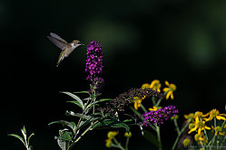 untitled140830-0571-Edit.jpg