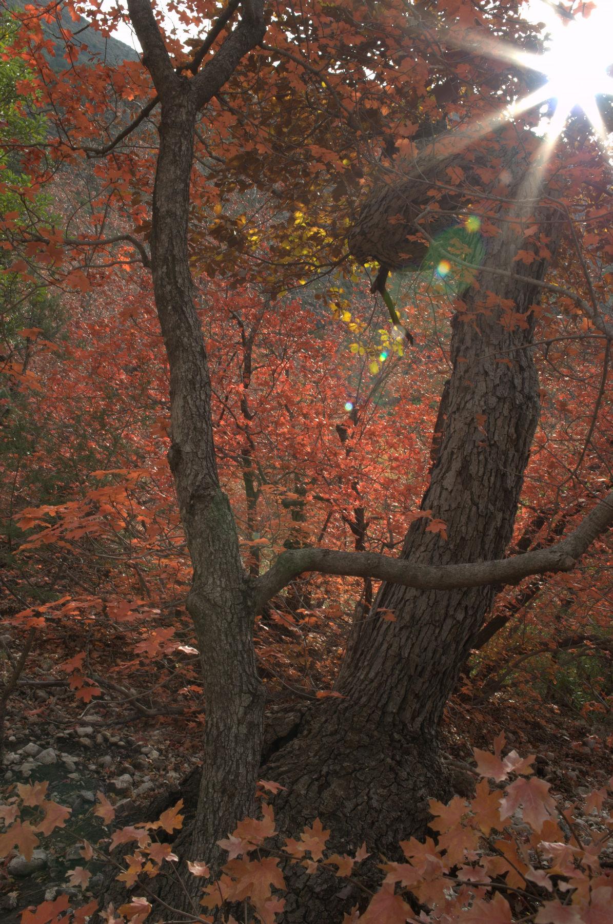 McKinttrick_Canyon