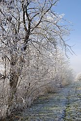 00010516_Winter.jpg