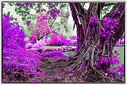 ANCIENT_TREE_0089.jpg